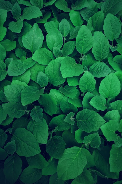 Fresh green leaves, advantages of green in color therapy