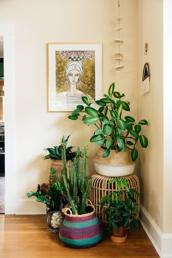 Plants in the BOHO style