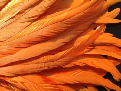 orange colored feather