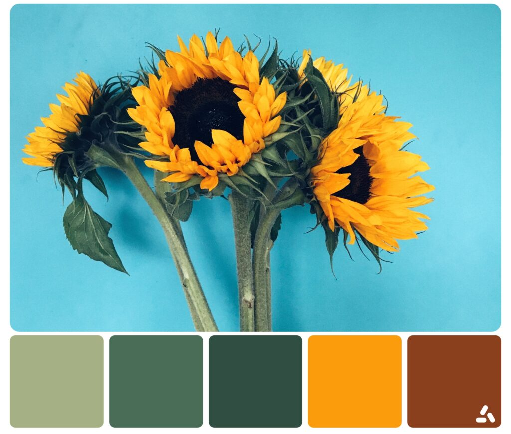 color palette of sun flowers