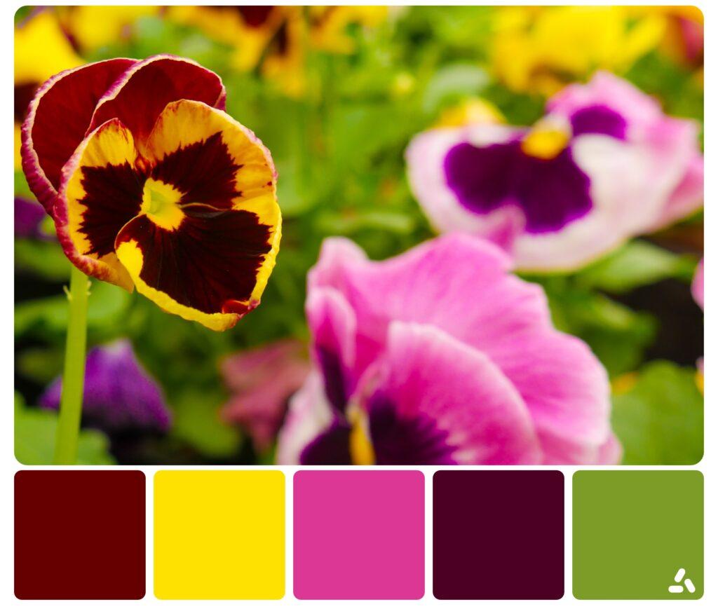 colorful flowers color palette