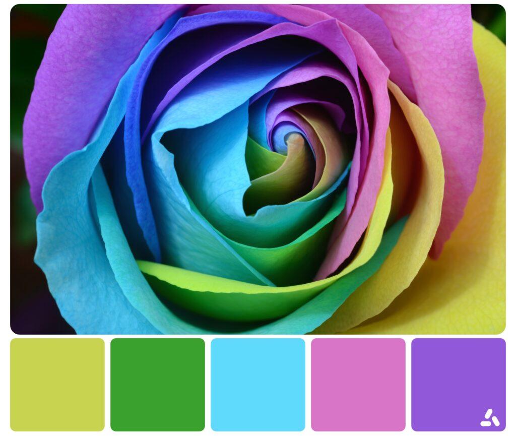 palette inspiration5