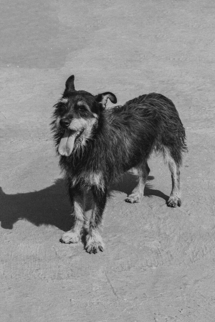 monochrome photo of a happy dog