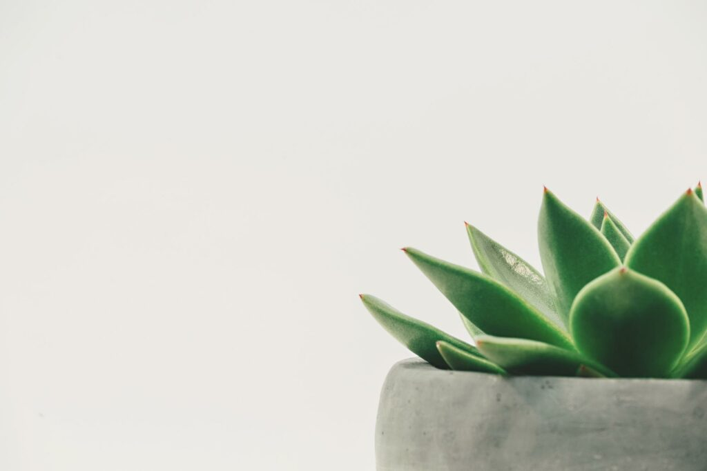 a cactus on the white background
