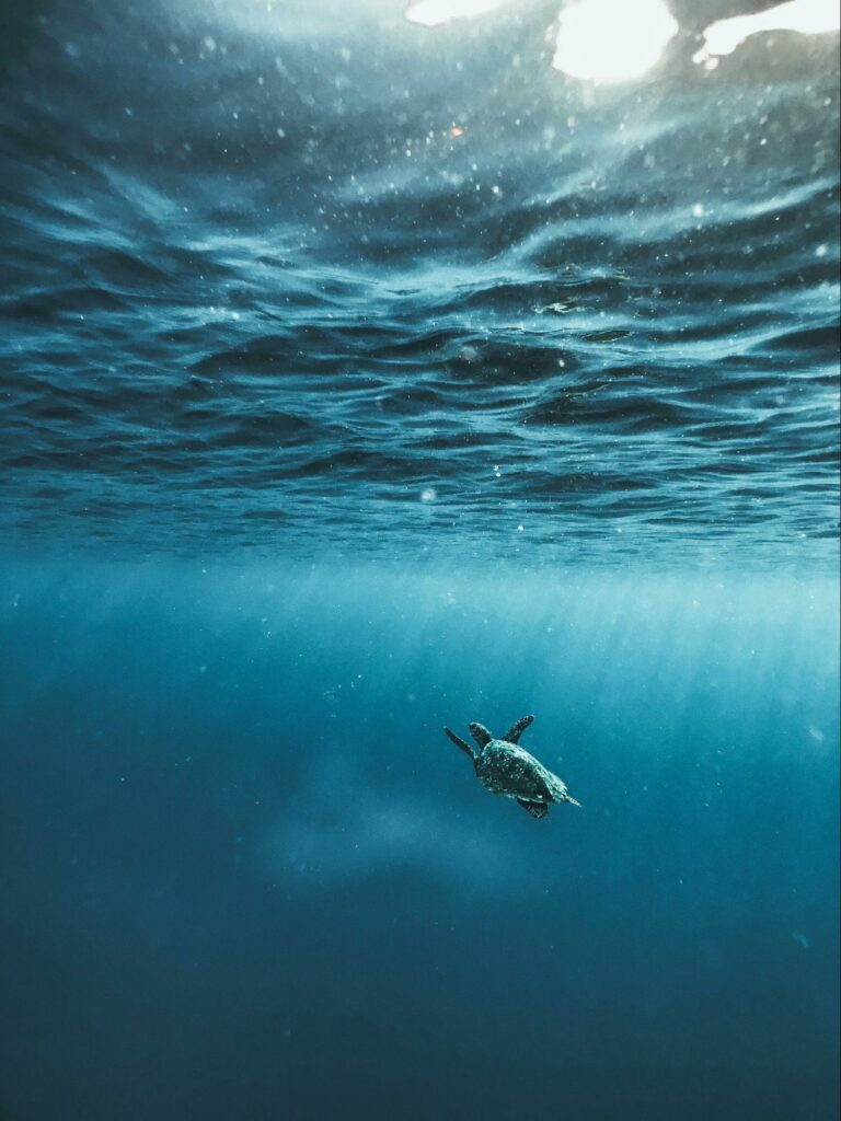 underwater photography of a turtle