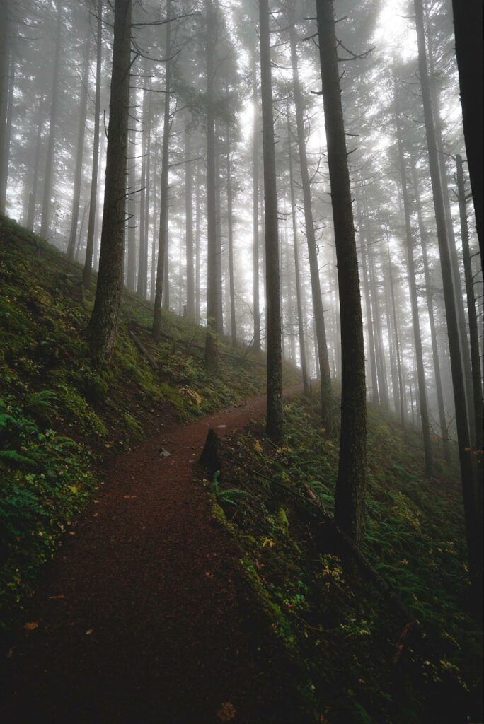 types of photography of foggy jungle