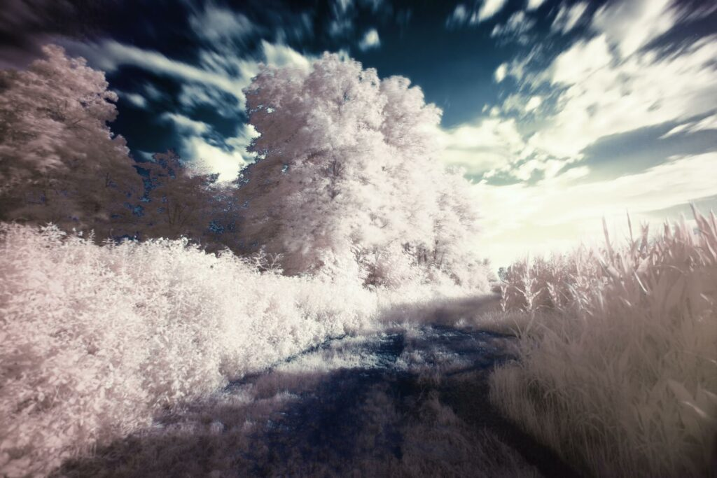 infrared photography of a forest