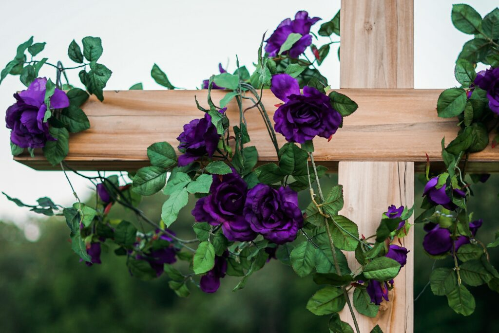 purple roses color