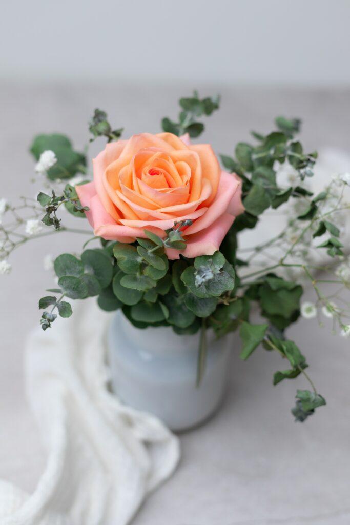 peach rose color