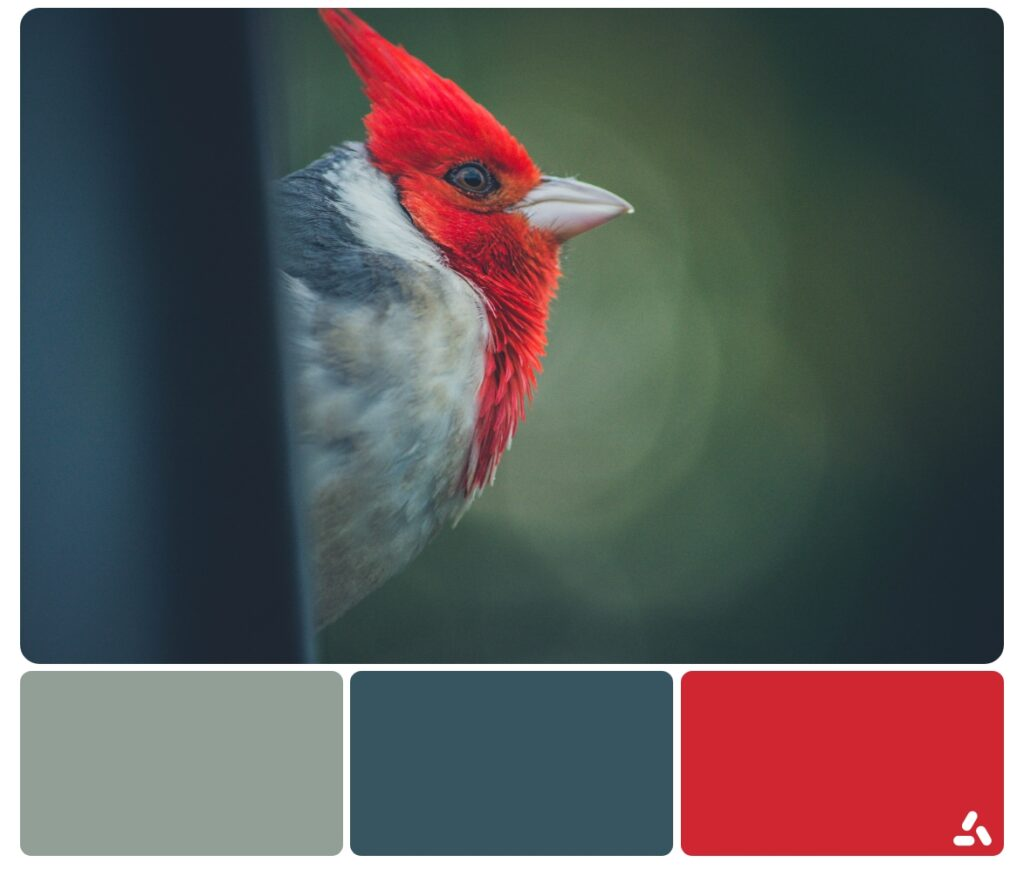 color palette ispired by birds