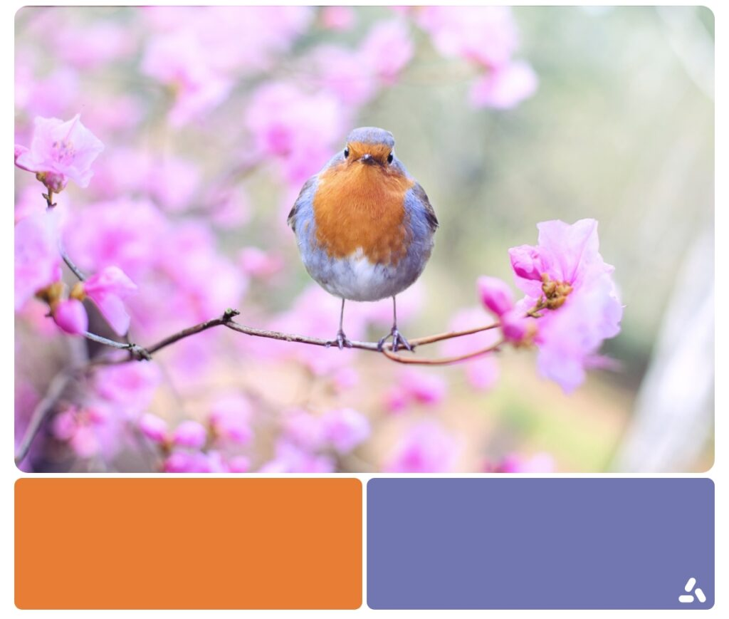 color palette ispired by nature