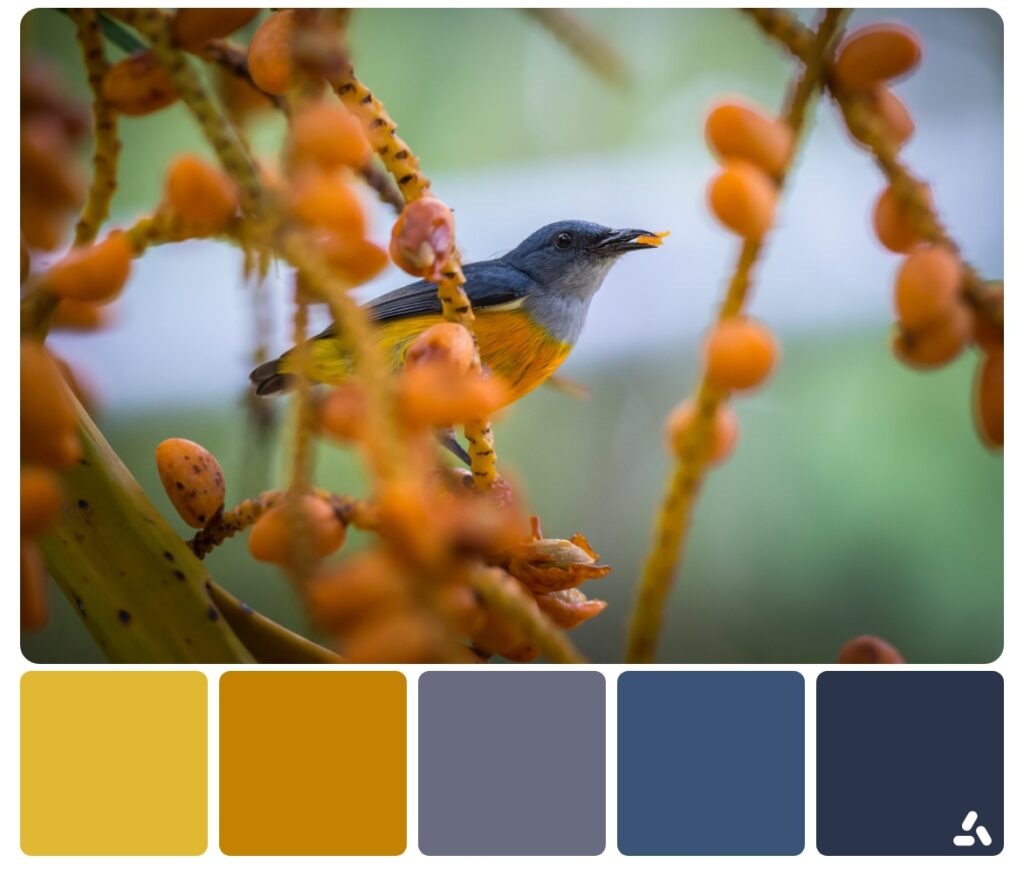 color palettes ispired by nature