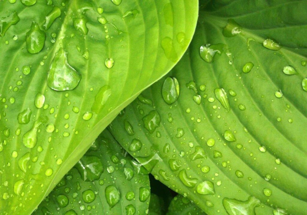 color symbolism of green