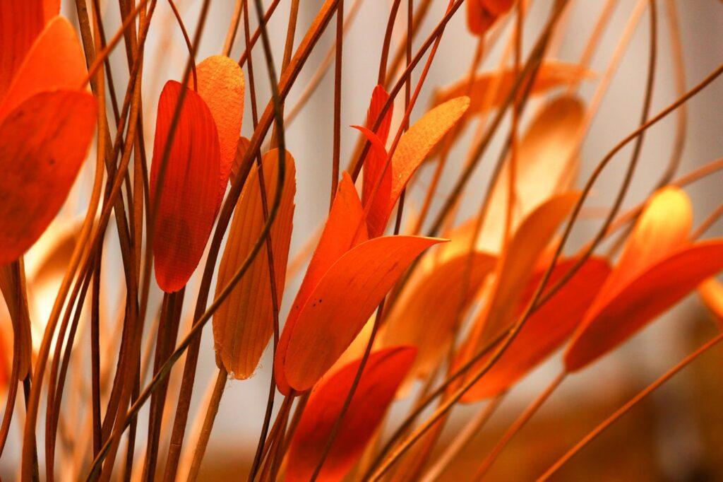 photo of orange flower
