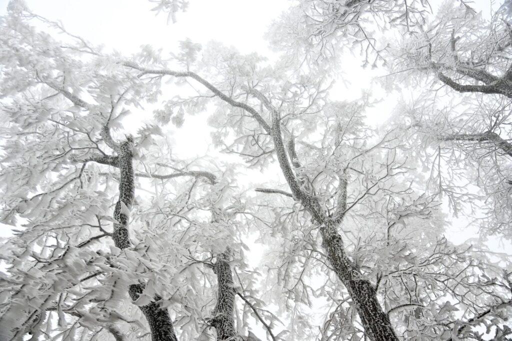 photo of snow