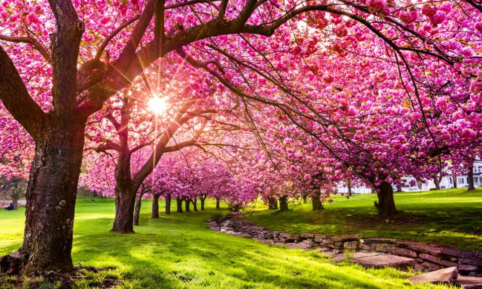 colorful spring nature