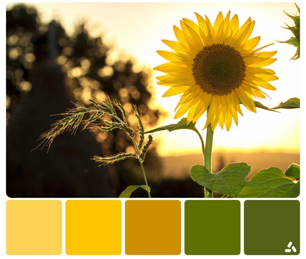a sunflower in summer