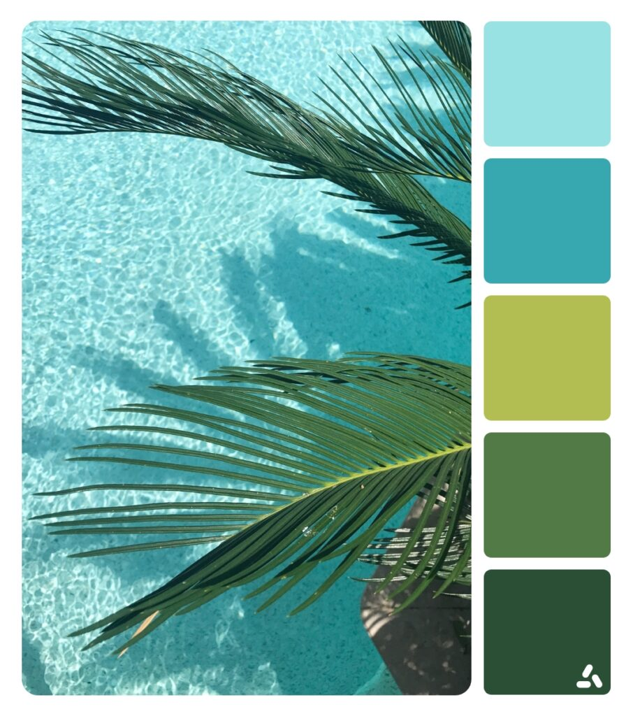 a palm by the pool in summer