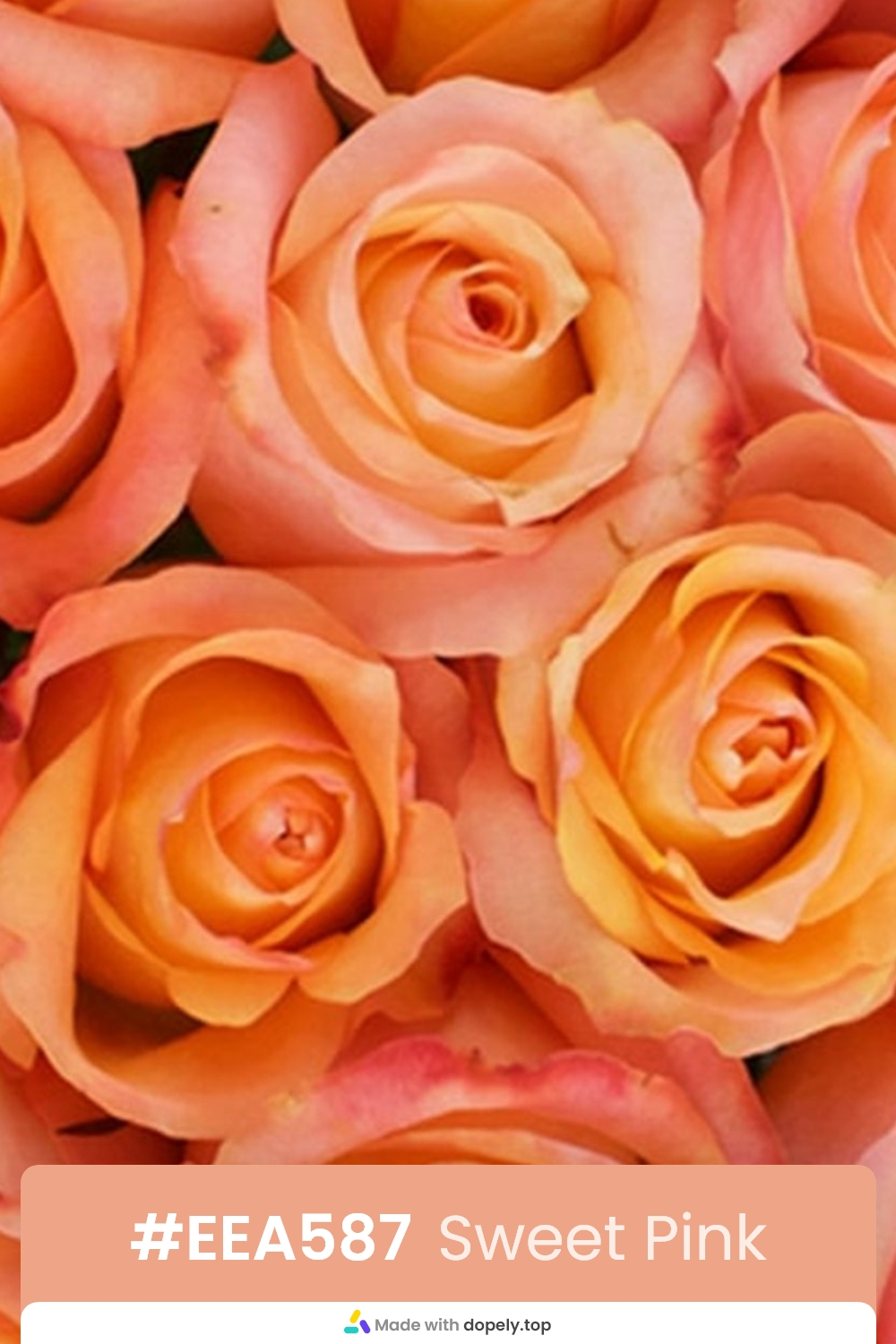 pink color rose flower meaning with hex code
