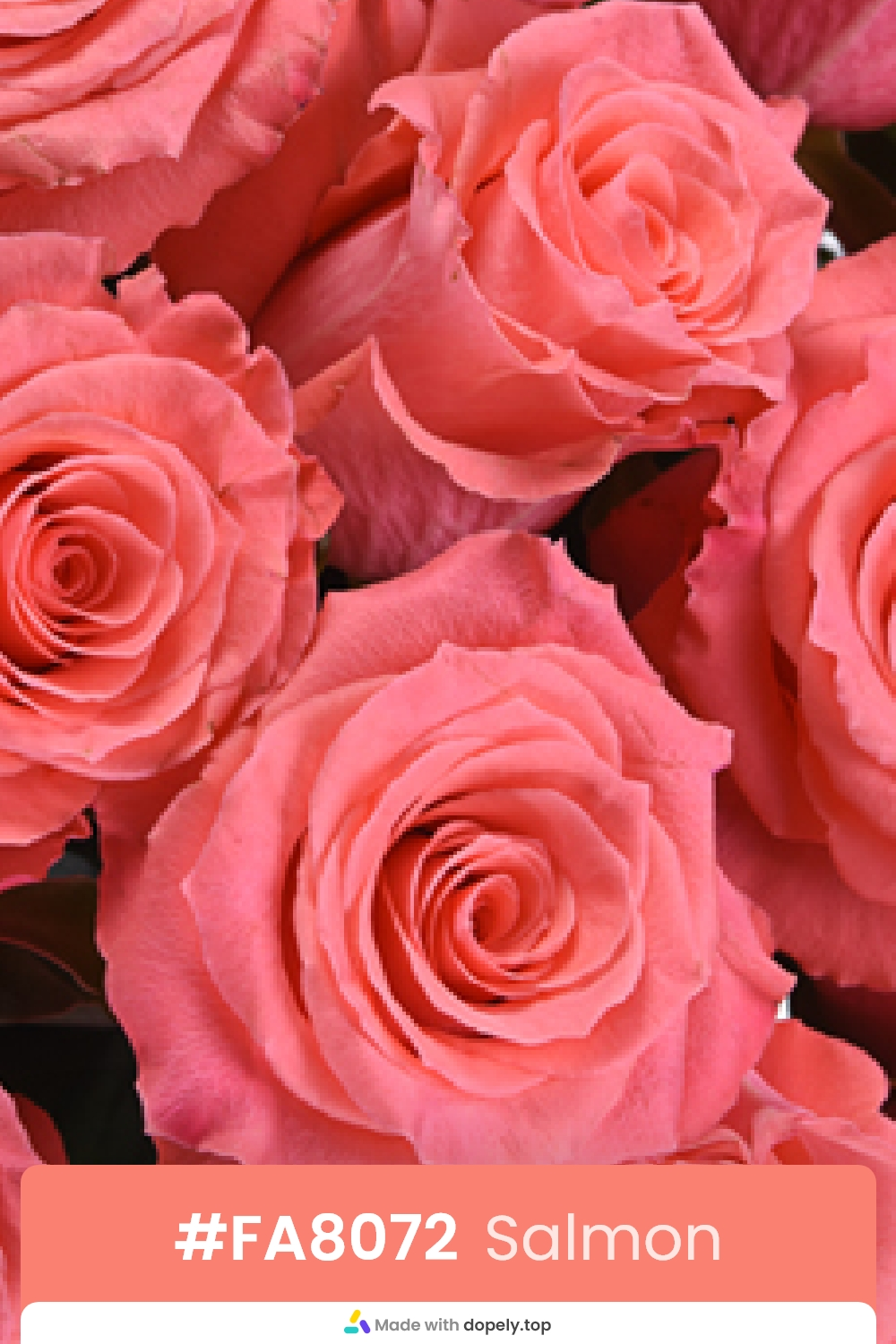 salmon color rose flower meaning with hex code