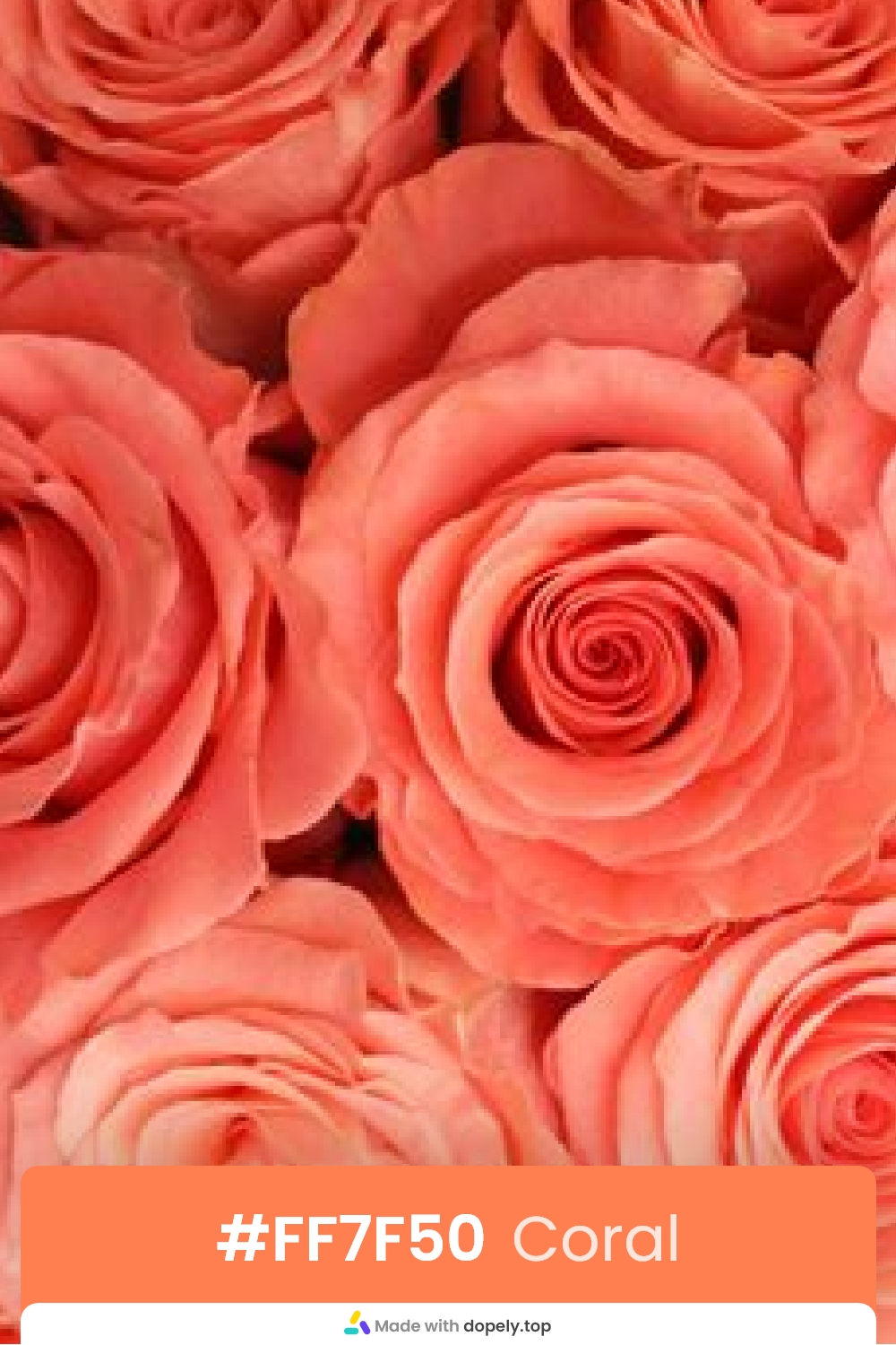 coral color rose flower meaning with hex code