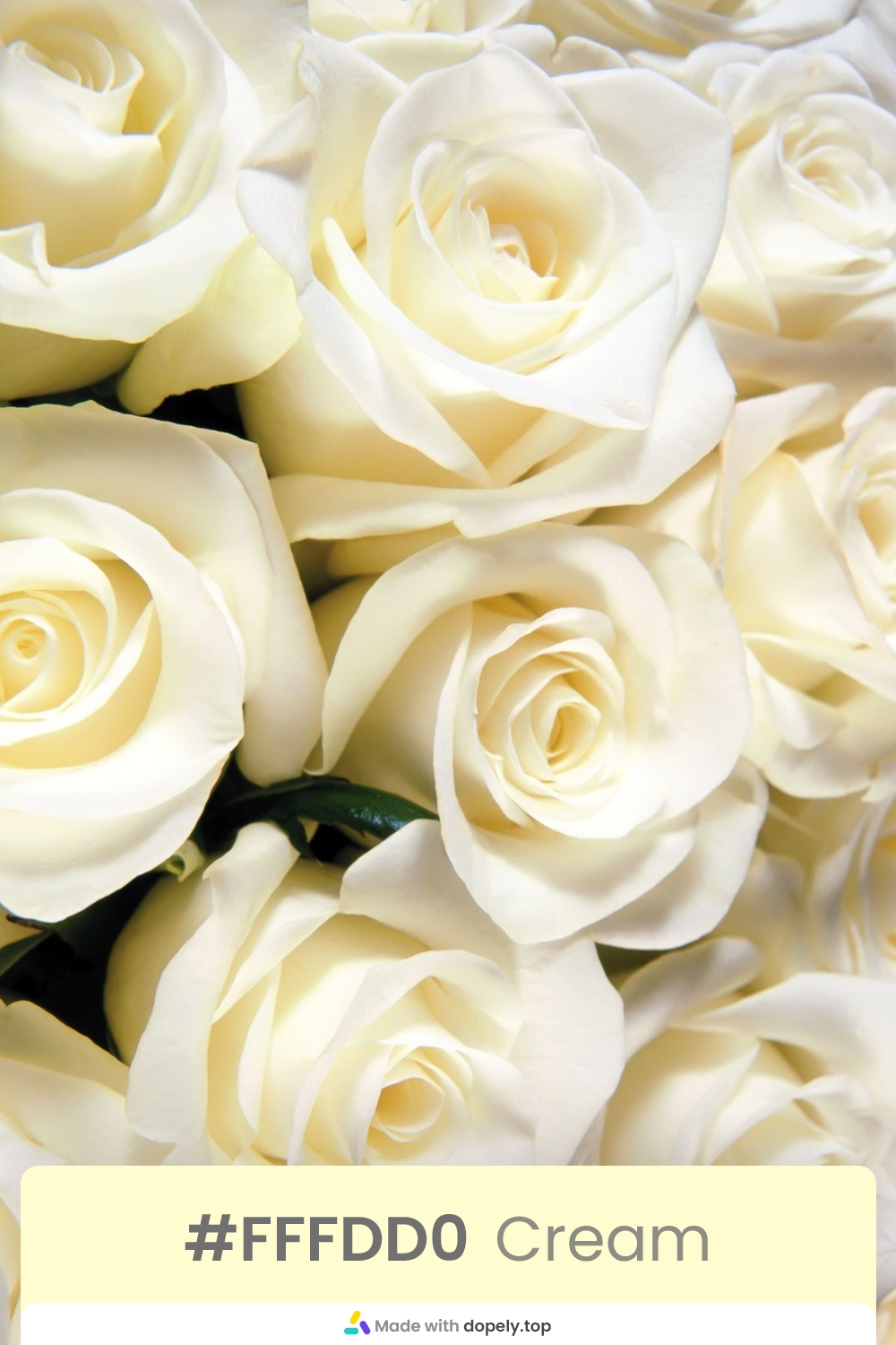 cream color rose flower meaning with hex code