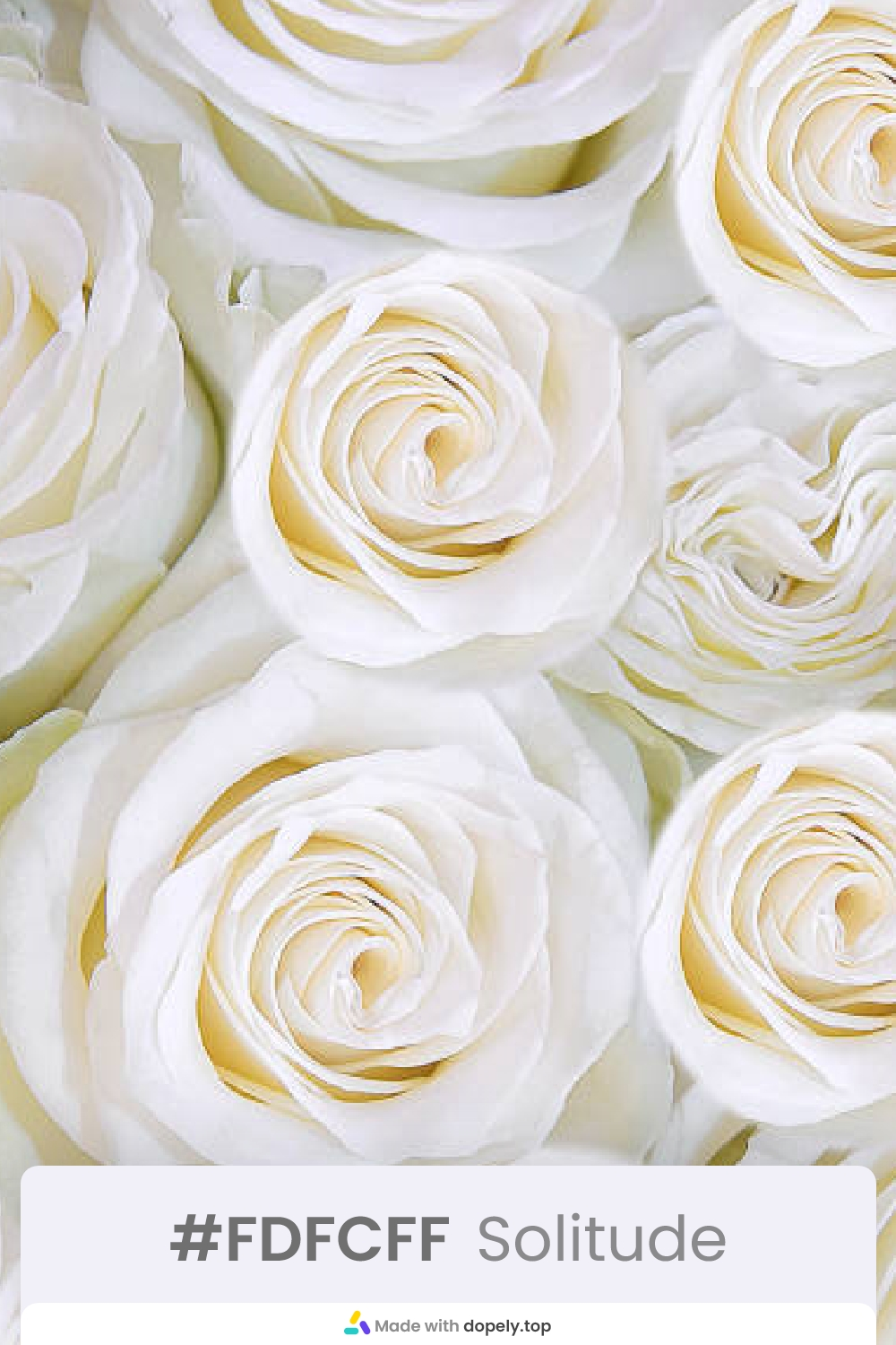white color rose flower meaning with hex code