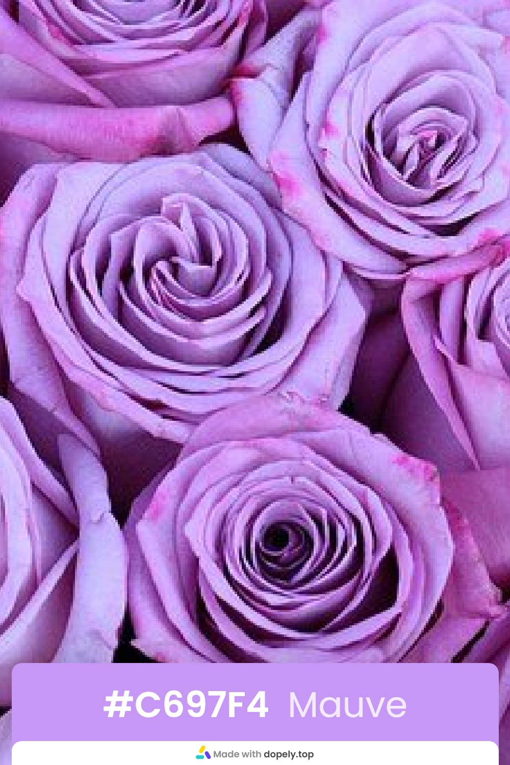 Mauve color rose flower with hex code