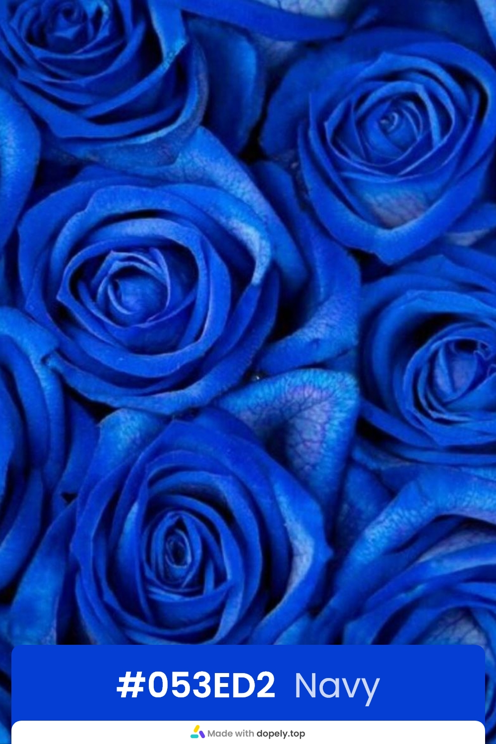 Navy color rose flower meaning with hex code