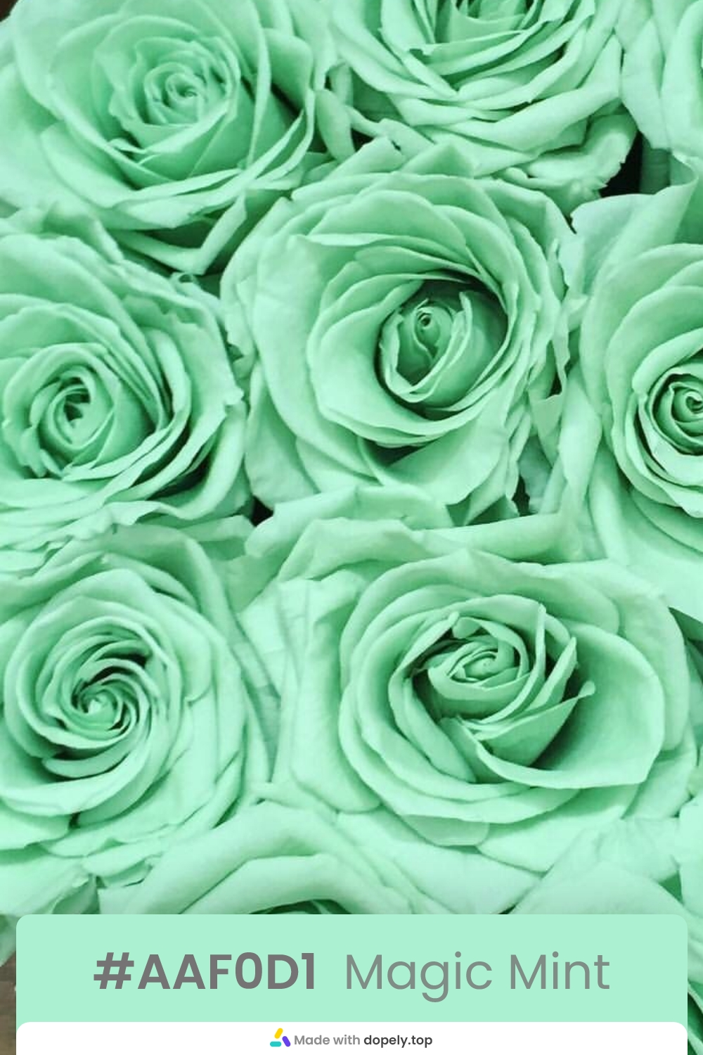 mint color rose flower meaning with hex code
