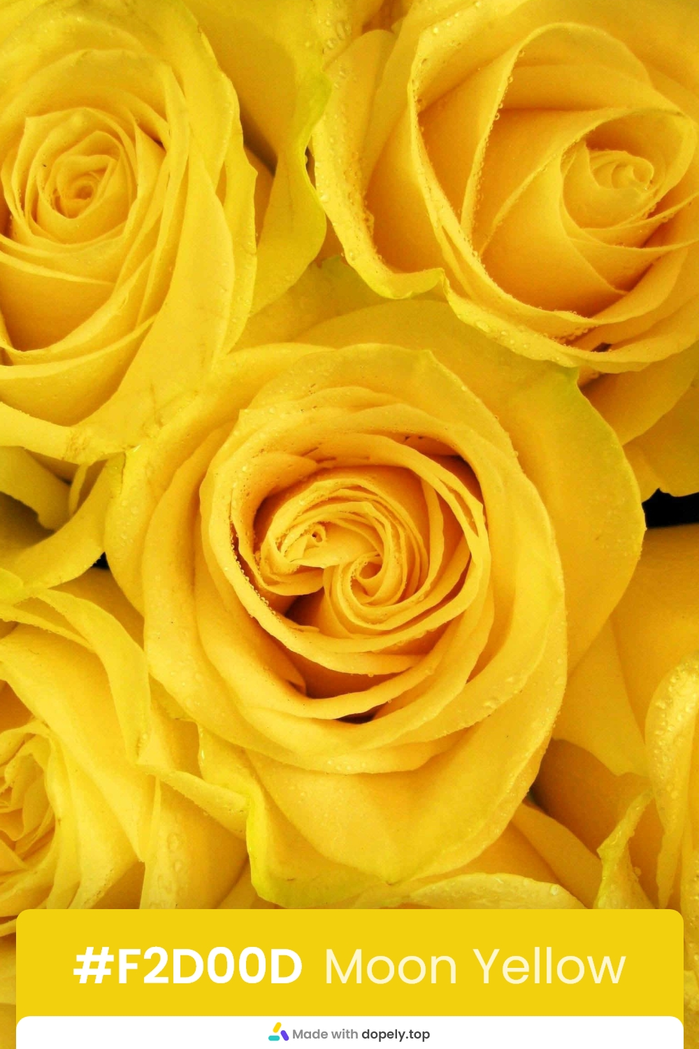 yellow color rose flower meaning with hex code
