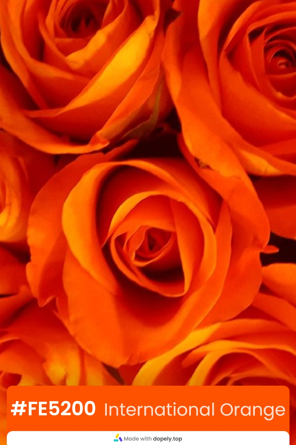 orange color rose flower meaning with hex code