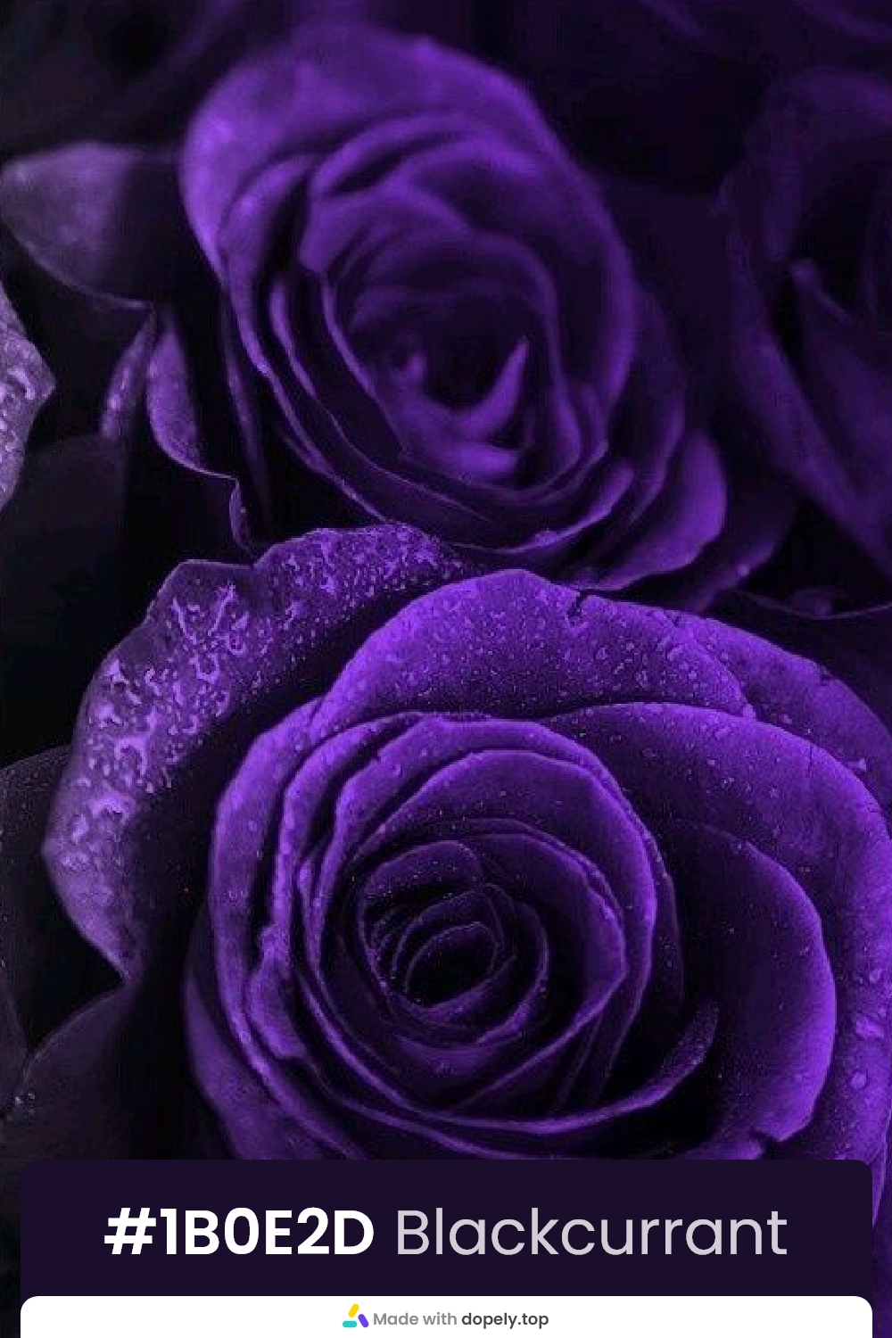 dark purple color rose flower meaning with hex code