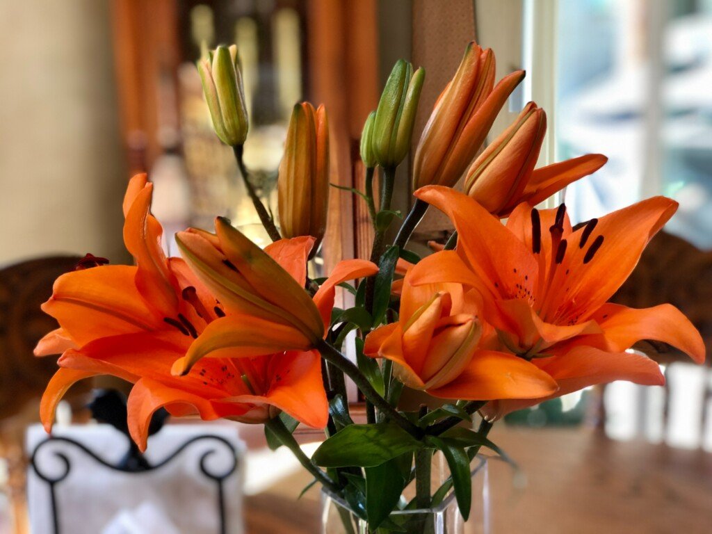 orange lilies and its buds on the dining table