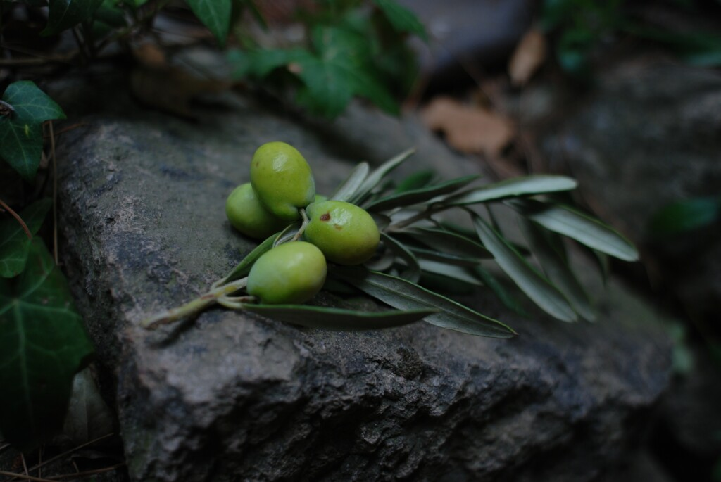 four green olives on the stone