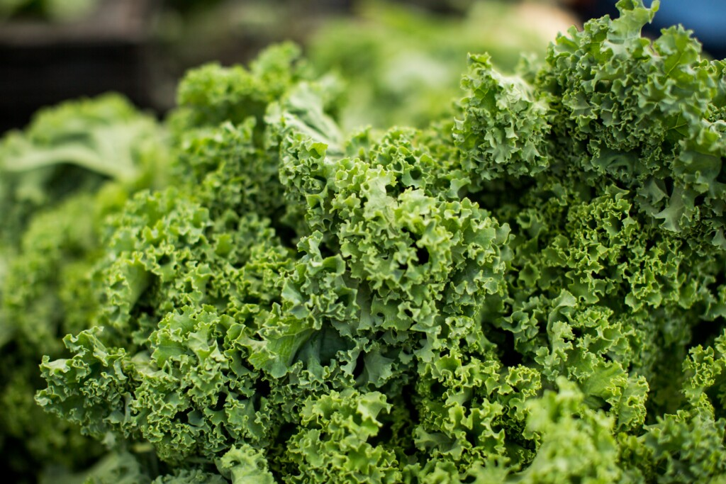 green kale for salad