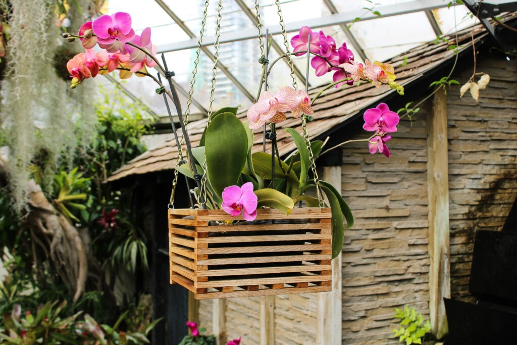 A BUNCH OF ORCHID FLOWERS IN A WOODEN BASKET THAT IS CHAINED TO THE ROOF OF A GREENHOUSE
