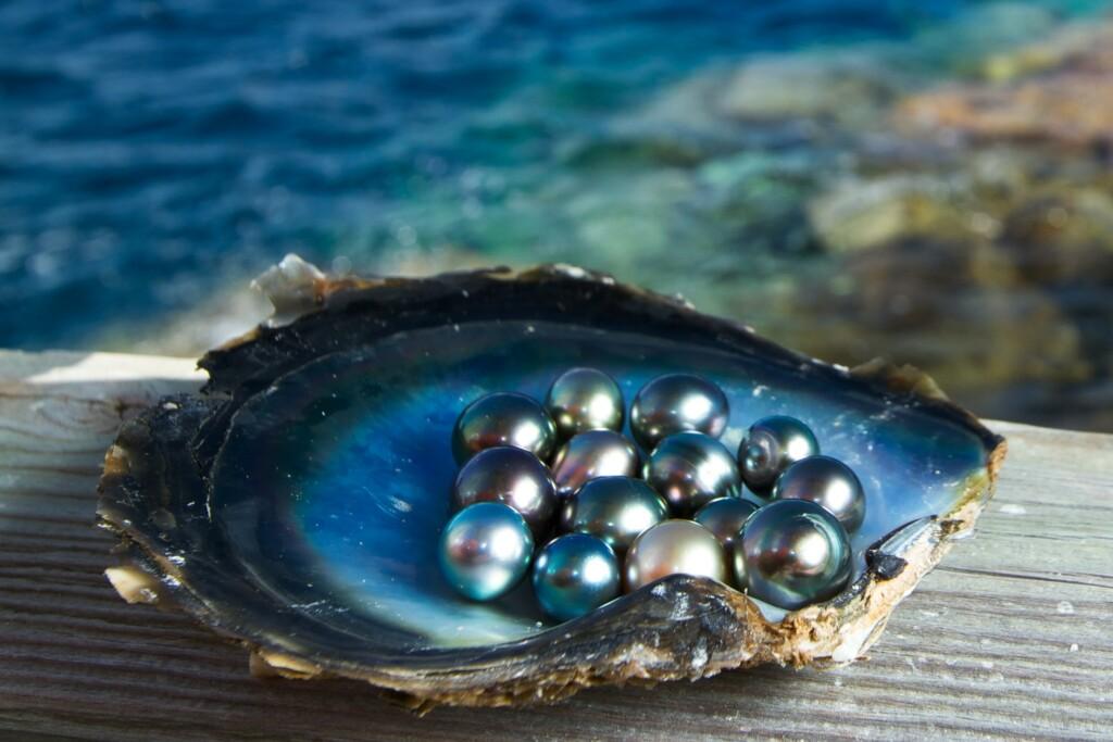 black pearl stones in a sea shell