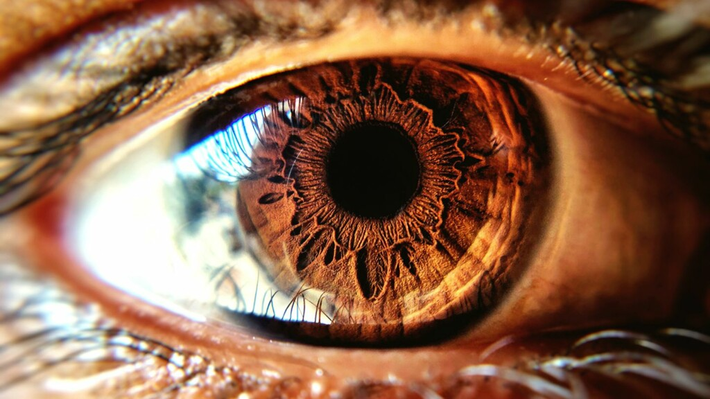 A brown human eye, representing brown color in humans