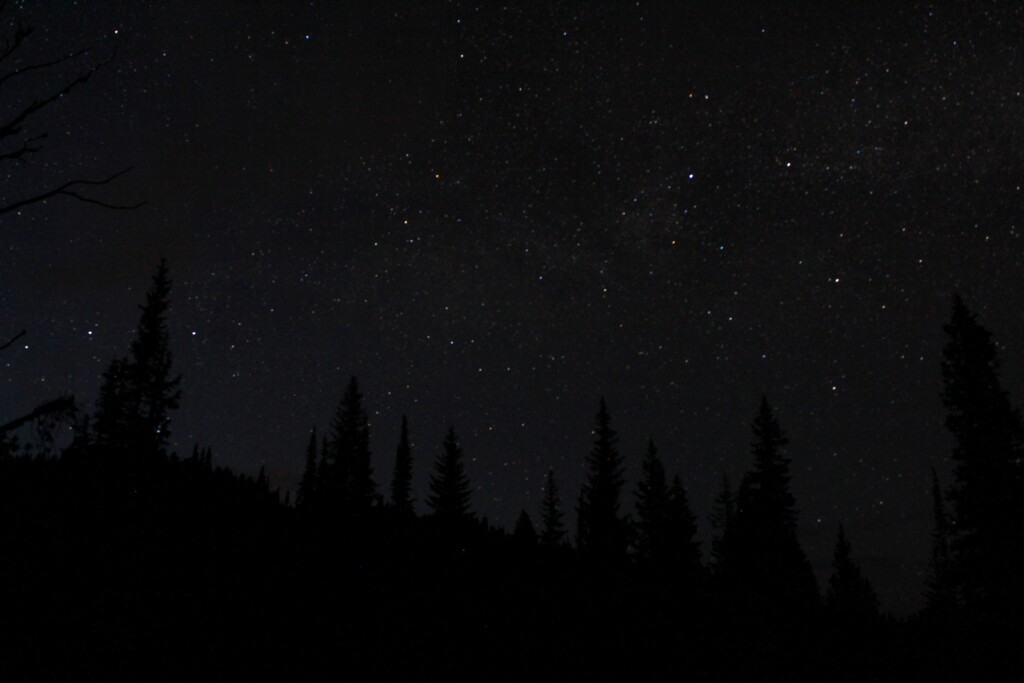 the starry sky above the forest on a dark night