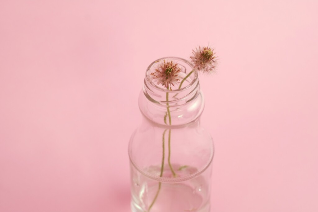 two dandelion flowers in a glass bottle on a pink background