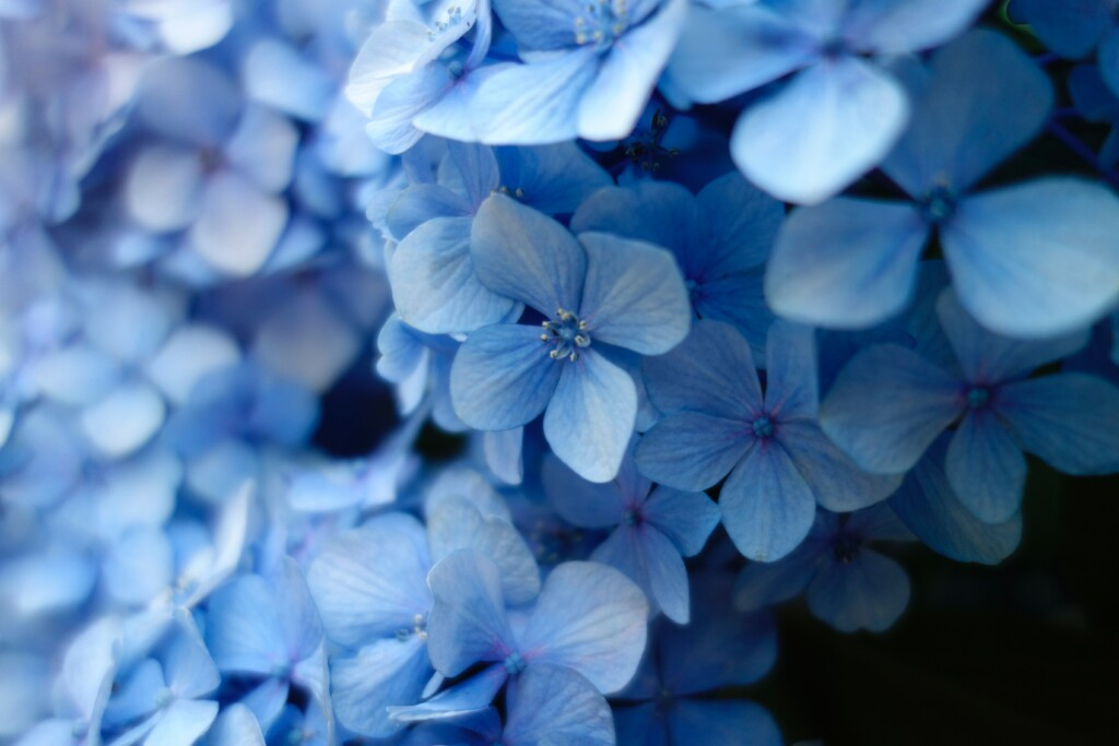 blue miniature flowers