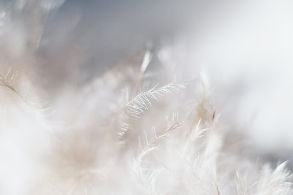 a photo of white feathers