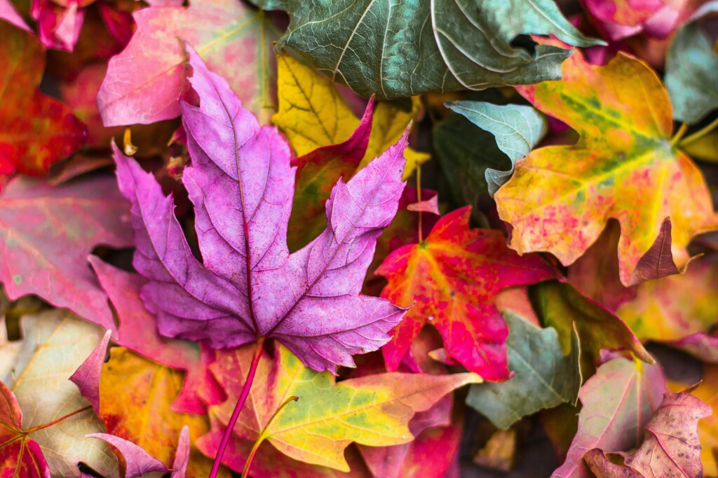 several colored tree leaves on the ground