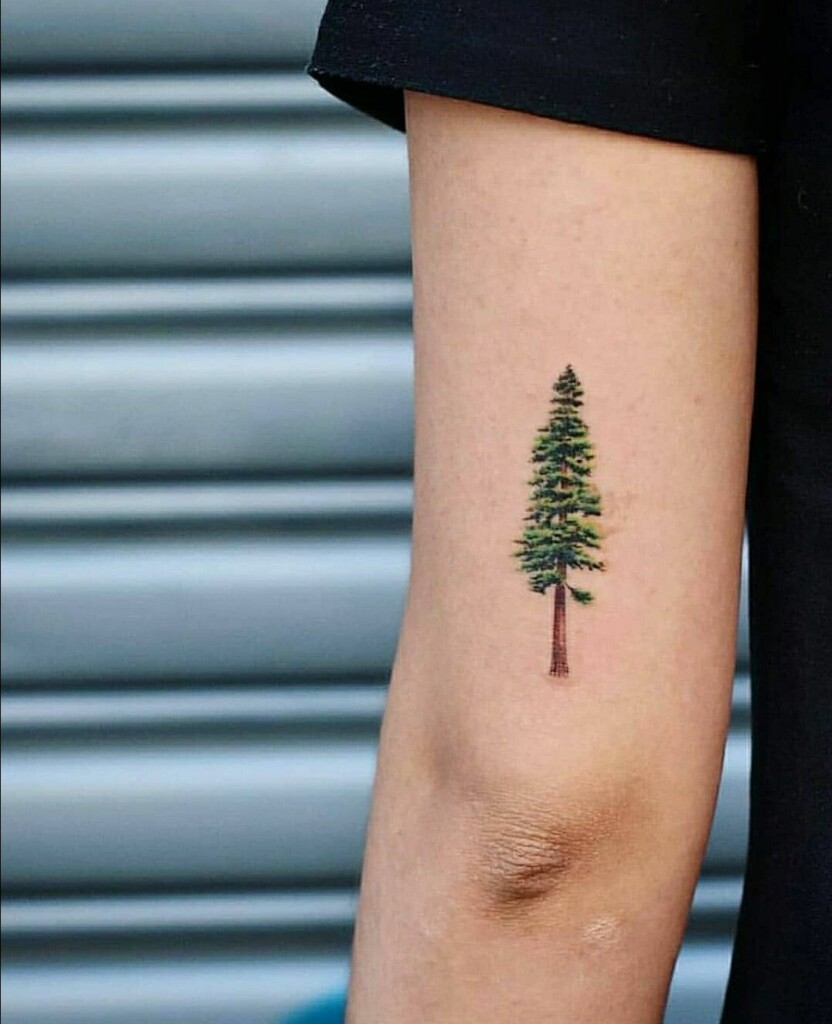 tattoo of cypress tree with green and brown tattoo colors on the forearm