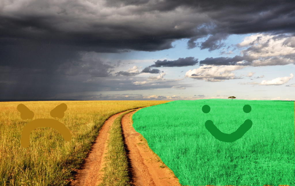 Color idioms: the grass is always greener on the other side idiom meaning