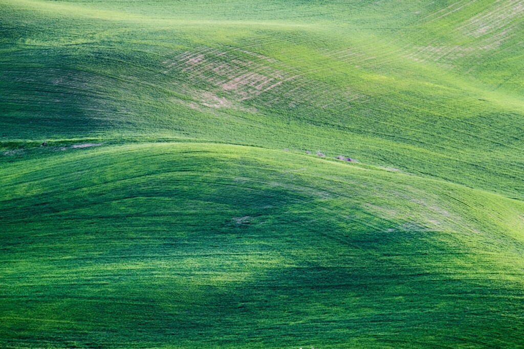 picture of green pastures