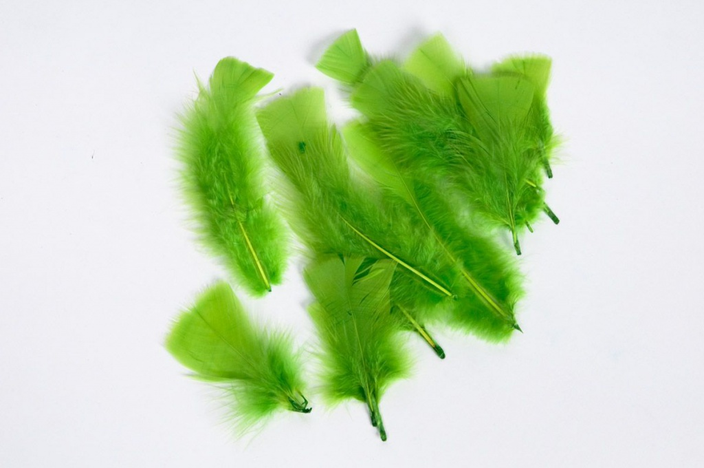 an image of green feathers on white background.