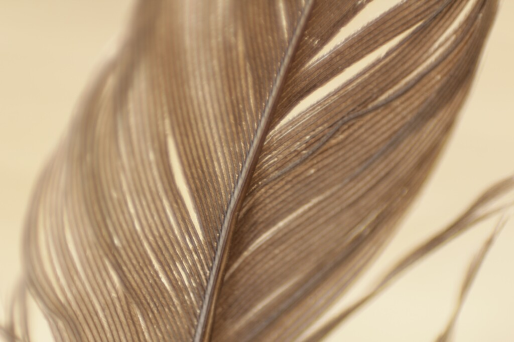 an image of a brown feather on light   brown background.