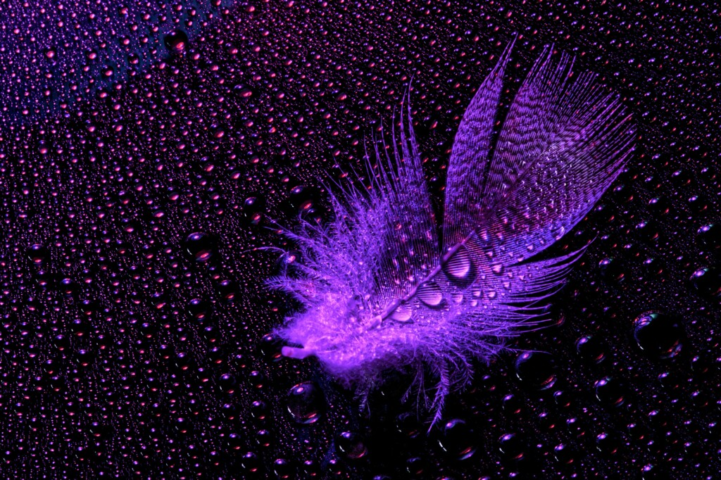 an image of a purple feather with drops of water on it.